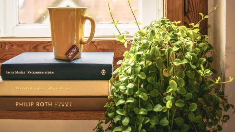 Gesunde und robuste zimmerpflanzen frauenseite living - Robuste zimmerpflanze ...